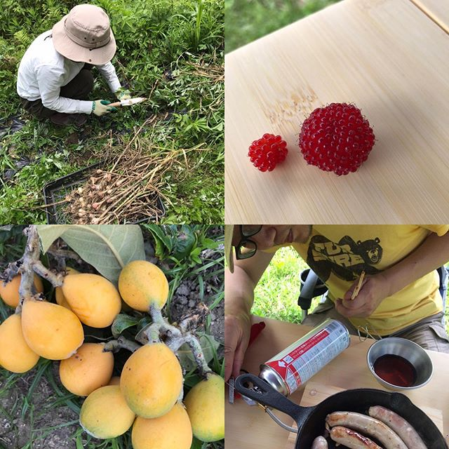 今日5/24はお休みをいただいて畑作業の日ニンニクやタマネギの収穫、安納芋の苗植えなど盛り沢山でしたー今日のデイキャンプ飯は、さっき収穫したニンニクの芽と昨日詰めた自家製ソーセージのソテーがメインでした(^.^) 明日も14-21の時短で営業します。#イルフェソワフ #ワイン#日本酒 #薬院#警固#熱中症注意