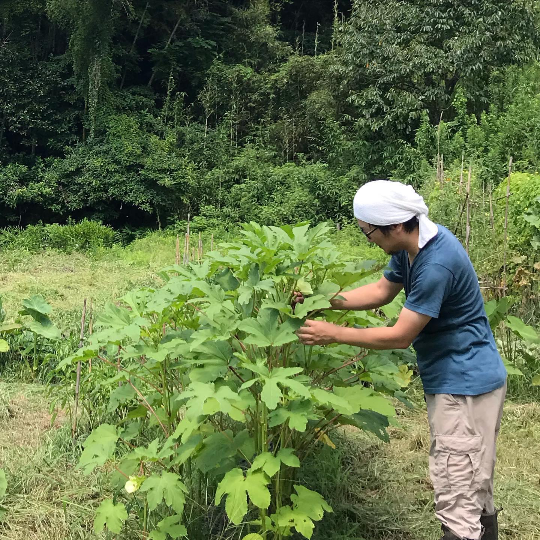 朝5時起きで畑の草刈り!涼しいうちに終わらせたい!でもすでに暑い!今日8/16はお休みいただいてます。明日8/17も都合により臨時休業いただきます。#イルフェソワフ #ワイン#日本酒 #薬院#警固#糸島の畑#熱中症注意