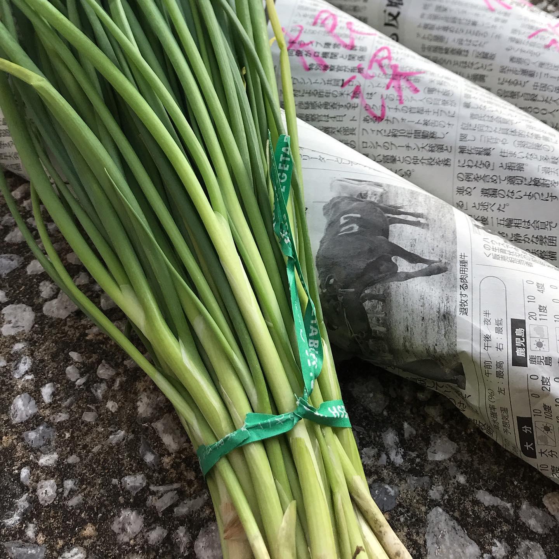 根深ネギの苗をゲット!今年は雨や台風の影響からか苗の育ちが悪く入荷が遅れてるらしい。改めて自然には敵わないなあ思う。週末に植えつけて収穫は来年初めかな!今日も17時より営業してます!よろしくお願いしますので#イルフェソワフ #ワイン#日本酒 #薬院#警固#根深ネギ#炭火焼き#包紙は農業新聞