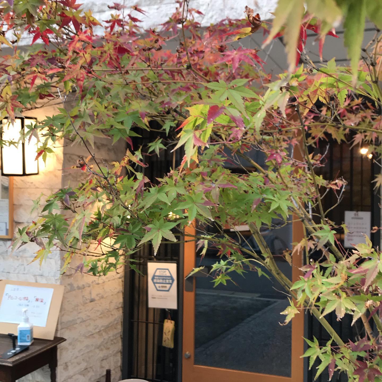 店の前の紅葉もいい感じに色づいてきました。今日11/10も17時より営業してます。明日11/11はお休みいただきます。#イルフェソワフ #ワイン#日本酒 #薬院#警固