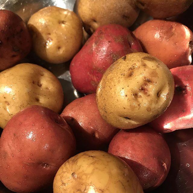 シェフマッキーは、いろんなジャガイモでポテトサラダをこしらえます。今日のジャガイモはアンデスレッドとキタアカリで。共に糸島産#イルフェソワフ #ワイン#日本酒 #薬院#警固#ポテトサラダ