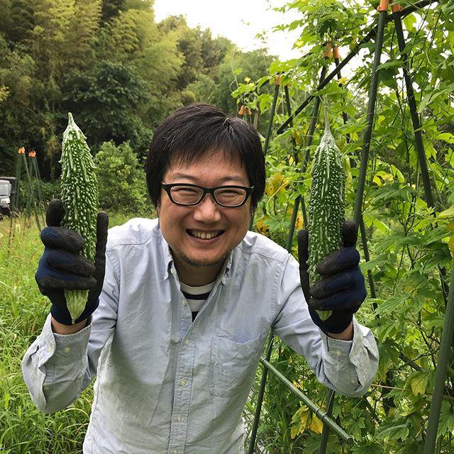 ヤブ蚊に刺されながらゴーヤをゲット!#イルフェソワフ #ワイン#日本酒 #薬院#警固