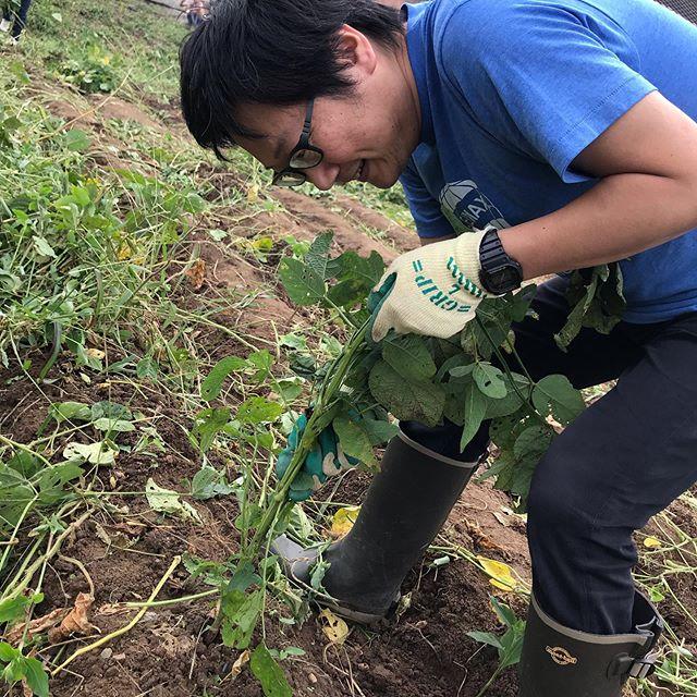 宗像日本酒プロジェクトで知り合った福島さんのえだまめ収穫のイベントに来てます。収穫したばかりの枝豆は、甘みがあってホント旨いなあ#イルフェソワフ #ワイン#日本酒 #薬院#警固#枝豆#農業福島園