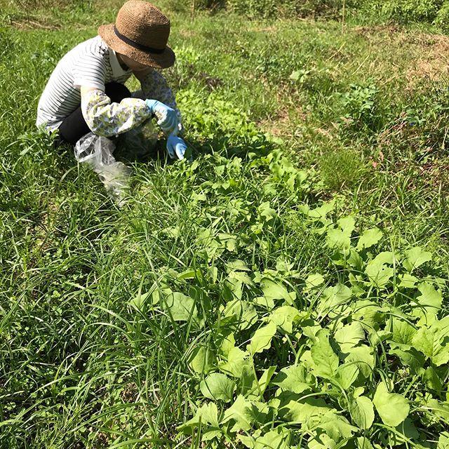 草と野菜。いい季節。今日もよろしくお願いします。#イルフェソワフ #ワイン#日本酒 #薬院#警固