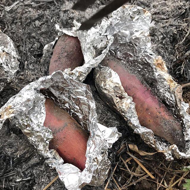 畑で焼き芋!焚き火での火入れは絶妙。想像以上に美味し#イルフェソワフ #ワイン#日本酒 #薬院#警固