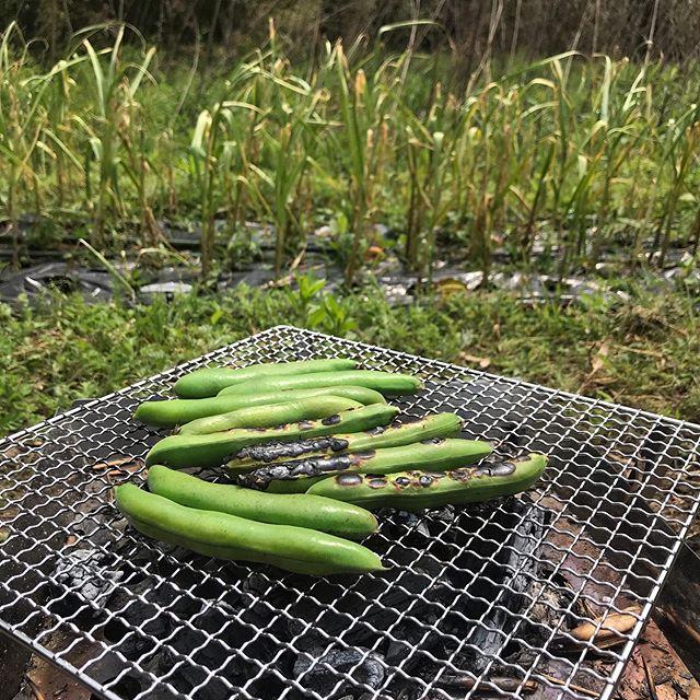 本日5/5はお休みいただいています。明日6日までお休みです。毎年連休は夏野菜の苗の植え付け作業に勤しみます。