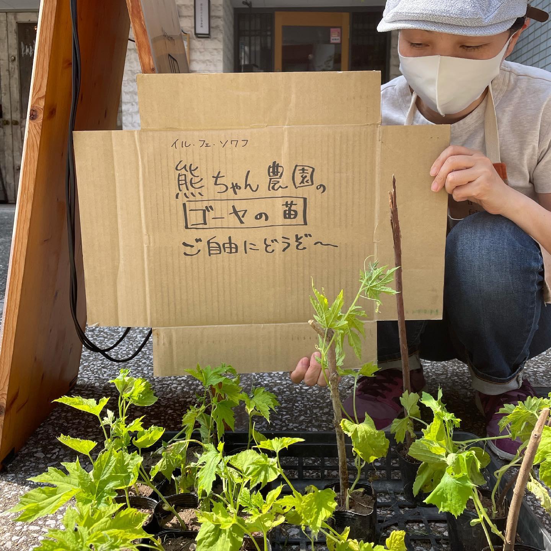 店の前に畑に生えてた天道萌え(てんとうもえ)のゴーヤの苗を置いてます。ご自由に持っていってください。グリーンカーテンが出来るかもよん。もちろんゴーヤも^_^「天道萌え」去年できた野菜のこぼれダネから芽が生えることをいいます。糸島の方の言葉なのかなあー#イルフェソワフ #ワイン#日本酒 #薬院#警固#感染防止宣言ステッカー貼ってます